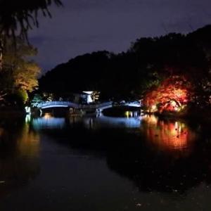 薬師池公園 ライトアップ始まる 4