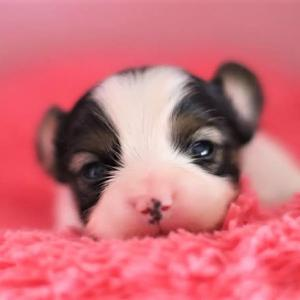 超可愛い癒しの仔犬(⋈◍>◡<◍)。✧♡と( *´艸`)