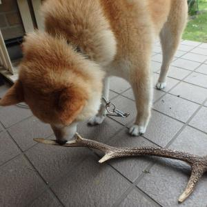 犬のおもちゃ!?
