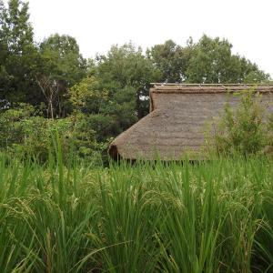 『木曽川水園の秋風景』