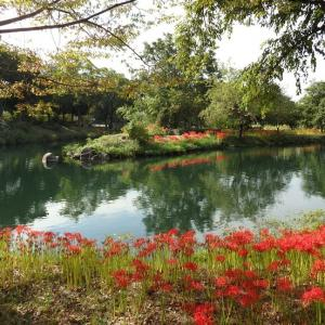 『木曽川水園の秋』