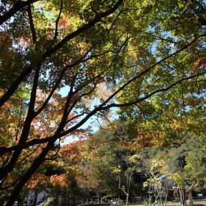 『岩戸森林公園の紅葉風景と木の実達~』
