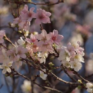 『各務原市民公園の桜と風景~』