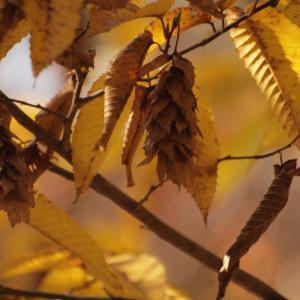 『木の実と水鳥と風景を・・・・・(木曽川水園)』