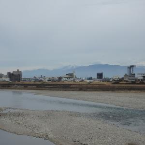『川秋沙(カワアイサ)と長良川周辺の風景~』