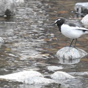 『木曽川水園の水辺の鳥達~』
