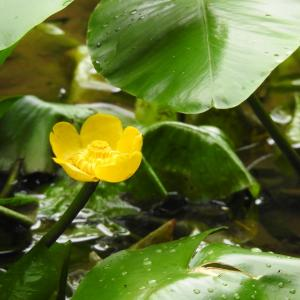 『水生植物と呼吸根と更紗満天星(百年公園にて・・・)』