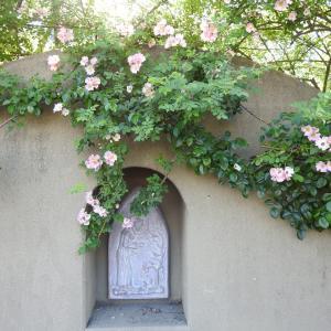 『薔薇館の薔薇達・・・・・』