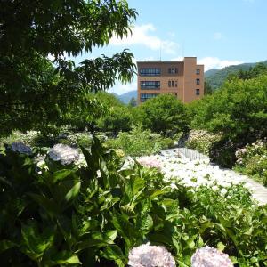 『本巣市佐原の紫陽花園風景』