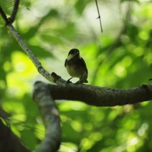 『鳥と花と萩の滝』