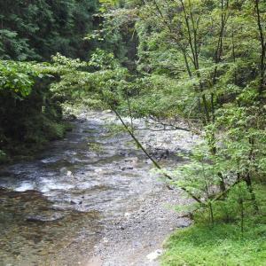 『釜ヶ滝周辺の植物と流れ風景~』