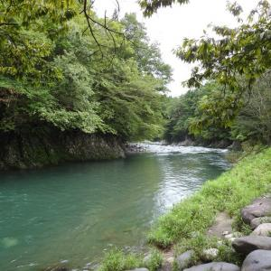 『川の流れと翡翠(カワセミ)と藪蔓小豆(ヤブツルアズキ)・・・・・』