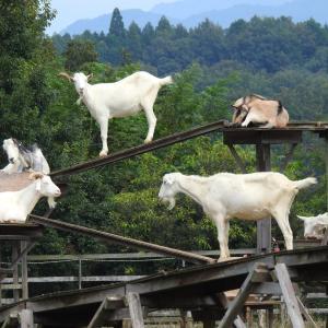 『里山ふれあい牧場の動物達~』