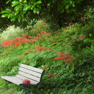 『加納城址公園の彼岸花』