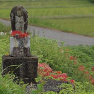 『津屋川の彼岸花風景』
