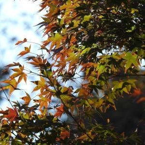 『朝倉運動公園の紅葉風景』