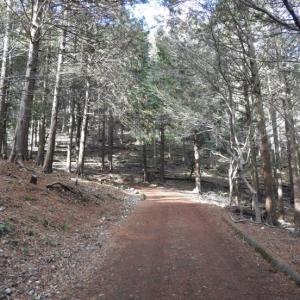 『森の散策路を歩いて~♪』