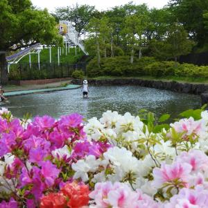 『神戸町ばら公園いこいの広場のバラ達~1』