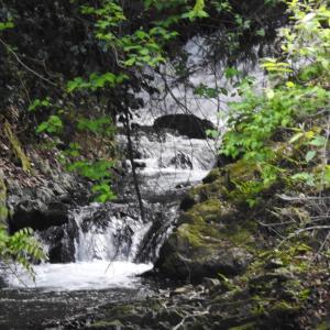 『不破(ふわ)の滝と山藤・・・・・』