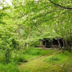 『長良川ふれあいの森の風景と植物達~』