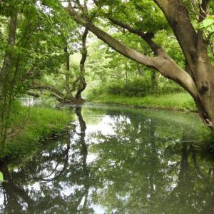 『河跡湖(かせきこ)公園の痩靫(ヤセウツボ)等~』