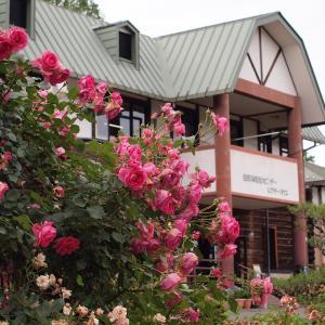 『岐阜市畜産センター公園の薔薇園』