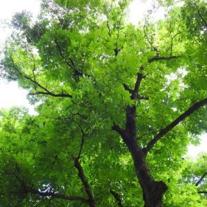 『釜ヶ滝周辺の花と木々達・・・・・』
