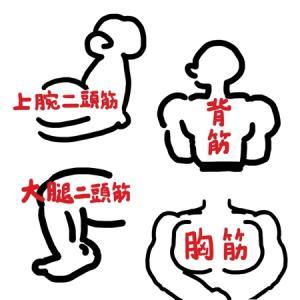 プールでの筋肉と、日常生活での筋肉
