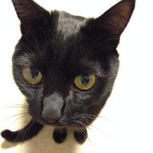 【長男】黒猫のクー2【偉大なまっくろくろすけ】