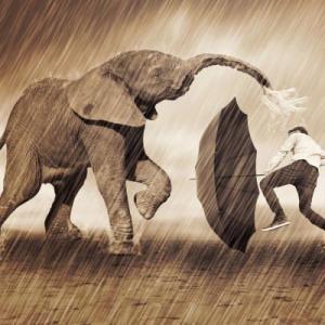 雨にも負けず、風には負ける。