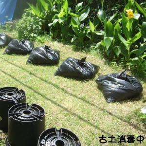 古い鉢土を消毒して再利用する。
