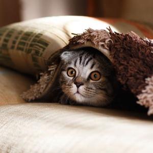 長生きできる枕の選び方