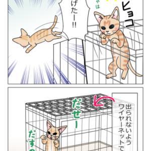 あんこ&麦986 猫を保護した筈なのに/ちびっこ現る⑤(猫まんが)