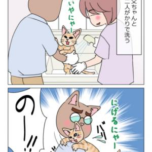 あんこ&麦987 猫を洗う時は/ちびっこ現る⑥(猫まんが)