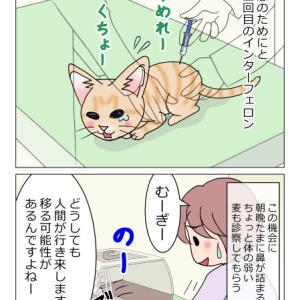 あんこ&麦988 巻き込まれる猫/ちびっこ現る⑦(猫まんが)