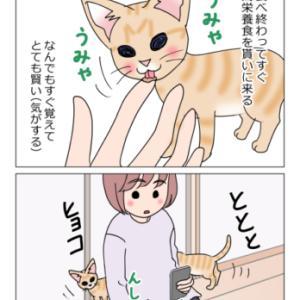 あんこ&麦989 猫トラップ/ちびっこ現る⑧(猫まんが)