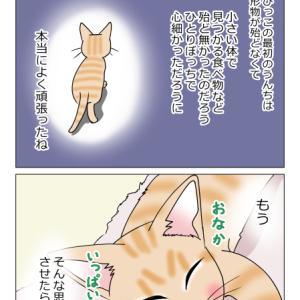 あんこ&麦991 家族/ちびっこ現る⑩(猫まんが)