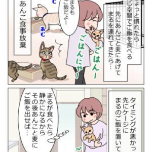 あんこ&麦994 慣れる(猫まんが)