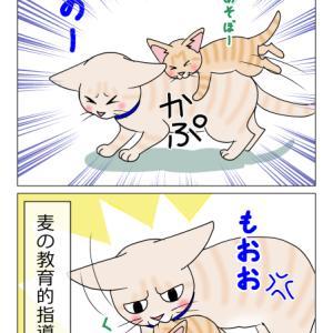 あんこ&麦997 接近(猫まんが)