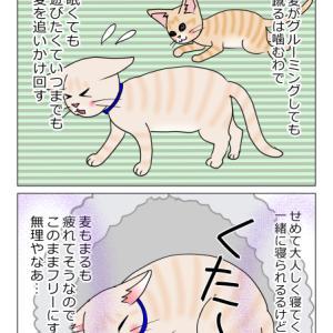 あんこ&麦998 醒めない(猫まんが)