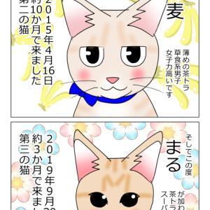 あんこ&麦1000 改めまして(猫まんが)