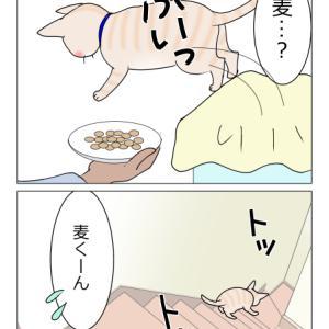 あんこ&麦1001 落ちる(猫まんが)