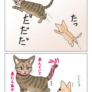 あんこ&麦1004 あんこ先生と遊ぼう(猫まんが)
