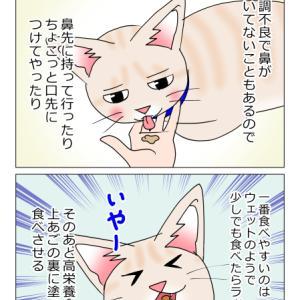 あんこ&麦1005 食べさせる(猫まんが)