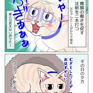 あんこ&麦1007 診察2(猫まんが)