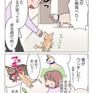 あんこ&麦1010 順番(猫まんが)