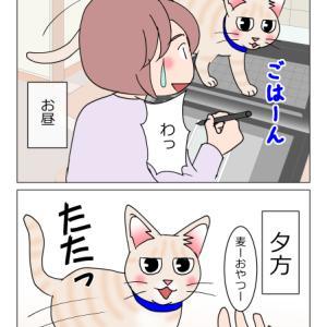 あんこ&麦1011 完全復活(猫まんが)