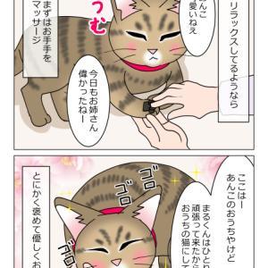 あんこ&麦1013 猫の接待(猫まんが)