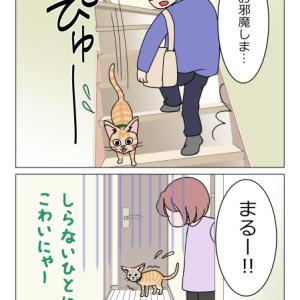 あんこ&麦1076 あんこ組(猫まんが)