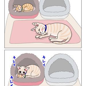 あんこ&麦1078 甘えん坊は…(猫まんが)